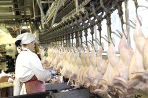 Liên minh châu Âu ngừng nhập khẩu thịt gia cầm  từ Ukraine